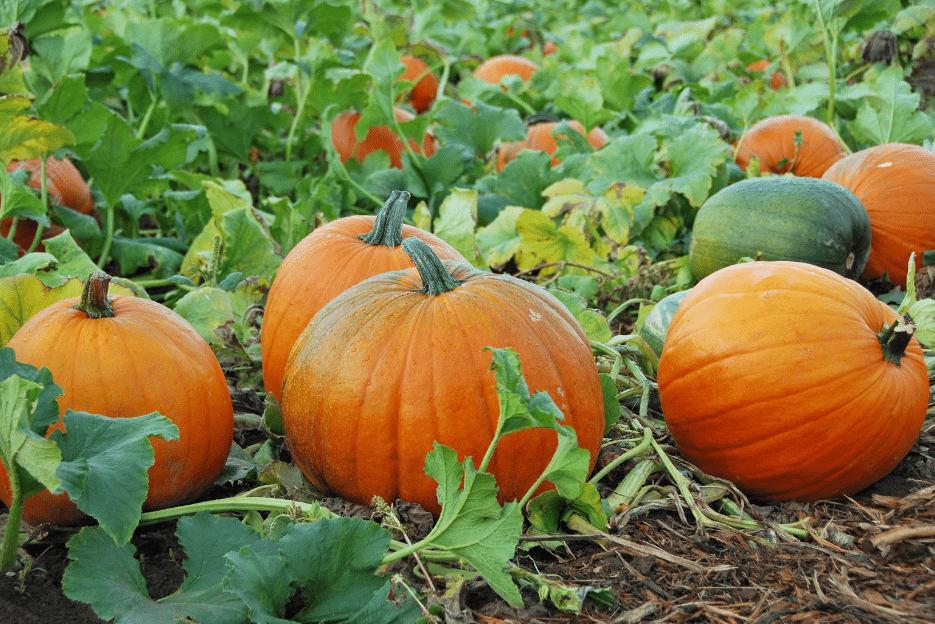 10 Fun Fall Activities for Families
